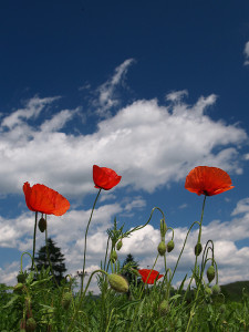 poppies-welcome-to-balanceflow
